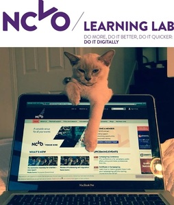 Culture, confidence and cats – building a digital workforce